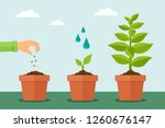 plant growing from seed to tree.... | Shutterstock .eps vector #1260676147