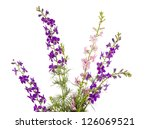 Stock photo wild flowers isolated on white background 126069521