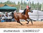 the arabian horse | Shutterstock . vector #1260802117