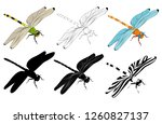 vector  isolated  dragonfly ... | Shutterstock .eps vector #1260827137