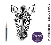 hand drawn sketch zebra head... | Shutterstock .eps vector #1260953971