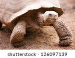 Galapagos Giant Tortoise Close...