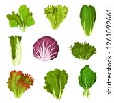 Collection Of Fresh Salad...