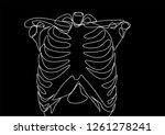 rib cage. black background....   Shutterstock .eps vector #1261278241