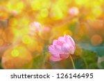 Lotus Flowers In Garden Under...