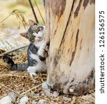 Stock photo kitty playing 126156575