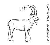 mountain goat  outline vector... | Shutterstock .eps vector #1261606261