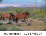 Two Horses At The Tonto...