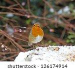 European Robin On Garden Feeder ...