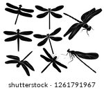 silhouette of flying... | Shutterstock .eps vector #1261791967