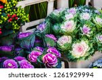 Colorful Ornamental Cabbages I...