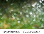 green blurred background of... | Shutterstock . vector #1261998214