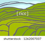 Rice Fields. Plantation On...