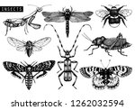 vector collection of high... | Shutterstock .eps vector #1262032594