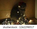 funny christmas british cat.... | Shutterstock . vector #1262298517
