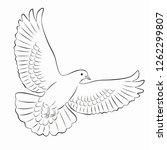 dove isolated illustration ... | Shutterstock .eps vector #1262299807
