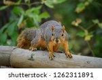 Squirrel On Alert