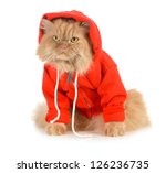 Cat Wearing Red Coat Isolated...