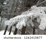 fir needles covered with frost. ... | Shutterstock . vector #1262415877