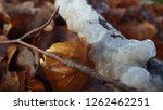 fungi of scotland | Shutterstock . vector #1262462251