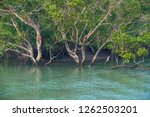 Dense mangrove forest line the many waterways of the Sunderbans, the estuary of the rivers Ganges and Brahmaputra