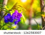 Purple Orchids Floral Flower Blurred - Fine Art prints