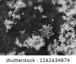 a natural  real snowflake close ... | Shutterstock . vector #1262634874