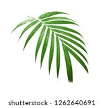 Tropical Nature Green Palm Lea...