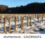 close view of machine cut...   Shutterstock . vector #1262806651