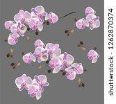 orchids. set of vector... | Shutterstock .eps vector #1262870374