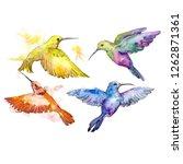 colibri in a wildlife. wild...   Shutterstock . vector #1262871361