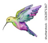 Green Purple Colibri In A...
