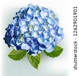 flower beautiful vector...   Shutterstock .eps vector #1262901901