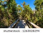 mahogany hammock trail  a... | Shutterstock . vector #1263028294