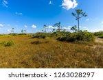 mahogany hammock trail  a... | Shutterstock . vector #1263028297