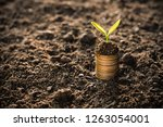 the seedlings are growing on... | Shutterstock . vector #1263054001
