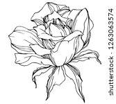 vector rose flower. isolated... | Shutterstock .eps vector #1263063574