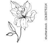vector orchid. floral botanical ... | Shutterstock .eps vector #1263075214