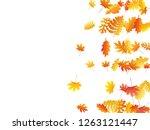 oak  maple  wild ash rowan... | Shutterstock .eps vector #1263121447