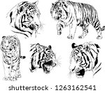 vector drawings sketches... | Shutterstock .eps vector #1263162541