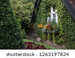 view of a beautiful lush green... | Shutterstock . vector #1263197824