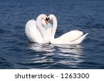 two kissing swans on blue water.... | Shutterstock . vector #1263300
