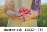 hands of a farmer with a ripe... | Shutterstock . vector #1263344764