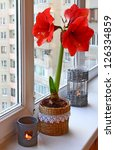 Red hippeastrum wich candlesticks on a window in winter. - stock photo