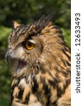 close up of owl with detail of... | Shutterstock . vector #12633493
