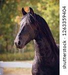 black friesian stallion   Shutterstock . vector #1263359404