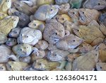 group of adult frogs on the... | Shutterstock . vector #1263604171