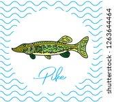 fish for food. vector... | Shutterstock .eps vector #1263644464