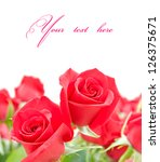 Flowers of red roses isolated on white background. selective focus - stock photo
