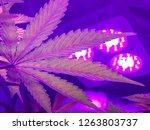 soft focus close up of indoor...   Shutterstock . vector #1263803737
